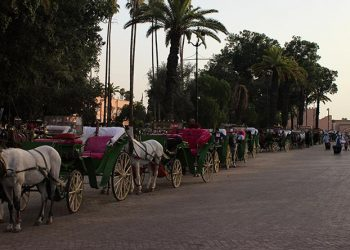 Top 10 Things to not Do in Marrakech
